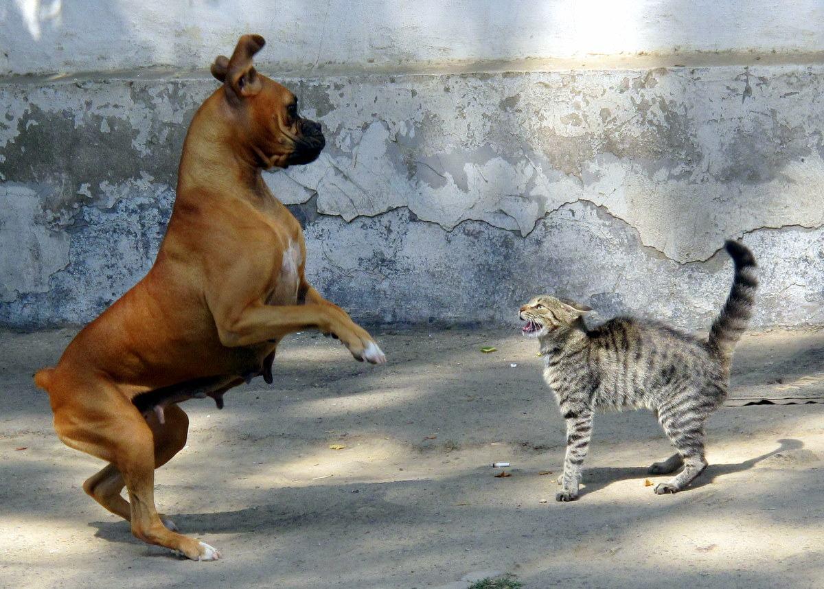 fight-or-flight - бий се или бягай