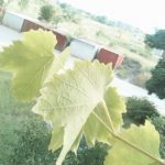 GV08S Sample Photos